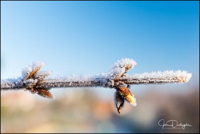 winter-6779