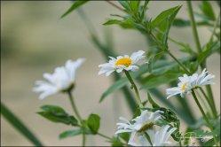 veldbloemen-8882